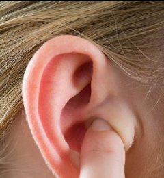 耳朵大小与寿命的关系