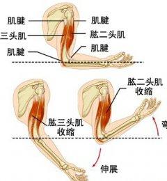 肱二头肌长头腱鞘炎治疗不及时可致冻结肩
