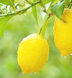 一杯柠檬水 让人心旷神怡一整天