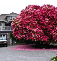 全球最美的树, 胜却人间风景无数!