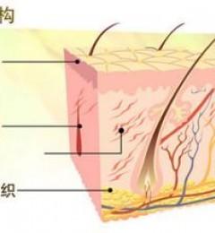 不懂皮肤的结构特点 护肤就无从谈起