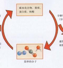 人体内新陈代谢的过程