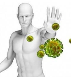 与动物生活会提高人的免疫系统功能