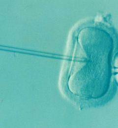 人工条件下生育的男性更易遗传父亲的生育问题