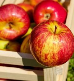 停经女性常吃苹果可显著降低血脂