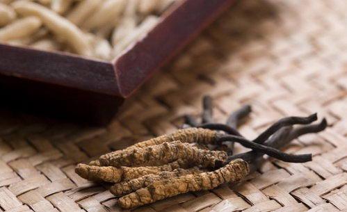 天价虫草,到底应该怎么吃才最有效?