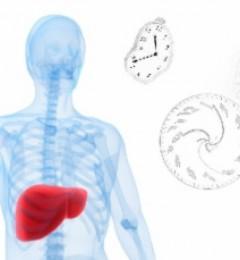 肝癌治疗最新发现!时间疗法的不二法则