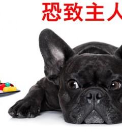 宠物久病、过世 主人易焦虑或忧郁