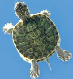 养生呼气当学乌龟 恢复元气不焦虑