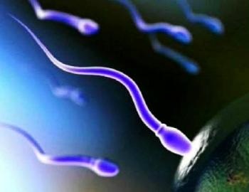研究发现垃圾食物吃太多,严重影响精虫活力!