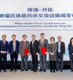 辉瑞授权开拓药业开发肿瘤抗体新药