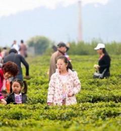 中国中医研究院对步云葡茶的爆料
