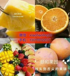 什么水果好吃又耐留|颐和果园原生态有机水果