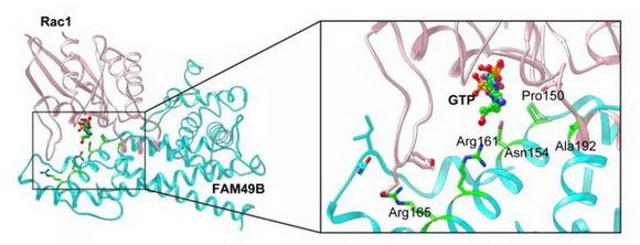 上科大王皞鹏团队利用全基因组CRISPR筛选探索全新肿瘤免疫药物靶点丨医麦猛爆料