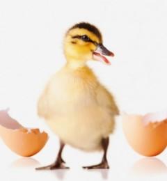 预防H7N9禽流感的六个要点