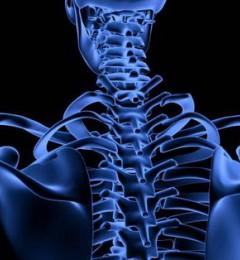 研究发现益生菌者能有效减缓年长女性骨质疏松
