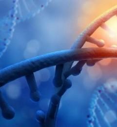 CELFULL NADH调理亚健康状态,抗击衰老有办法