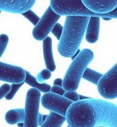 益生菌有益健康 暂未找到科学根据