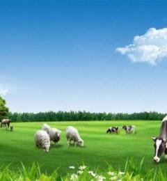 国外优质羊奶粉品牌大盘点,国外羊奶粉哪个品牌好?