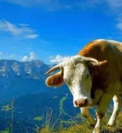 英国牛栏奶粉是分段详情,英国牛栏奶粉各段都有什么特点?