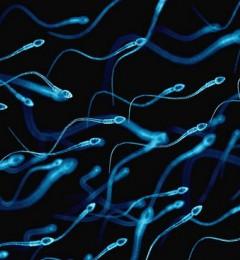 男性不孕危机不容忽视!求治人数增7倍