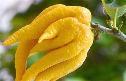 蔬菜水果外观长花斑,是纯天然还是过度用药?
