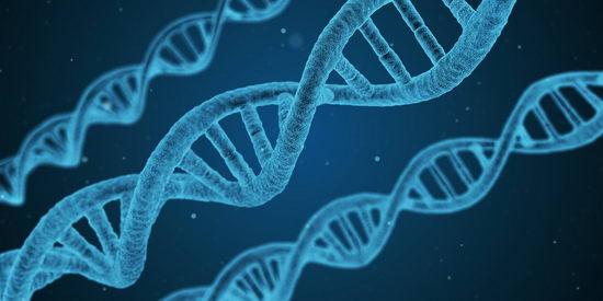 新生儿性别新发现 基因有重大影响
