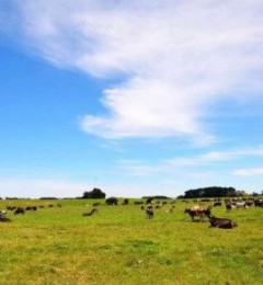 来自澳洲原产,爱薇牛奶粉全系列原装进口