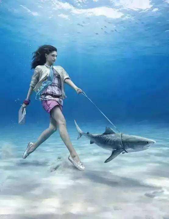 当你在海边散步,遇到一只会说话的海豚……
