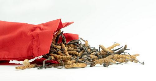 虫草参芪膏:冬虫夏草那么贵,到底哪里好?