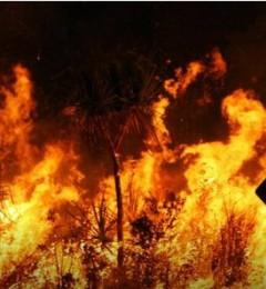 森林大火延烧4个月 澳洲政府是怎么救火的?