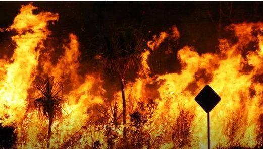 森林大火延烧4个月 澳洲人是怎么救火的?