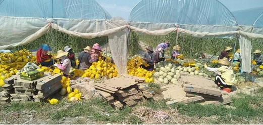 大润发抗击疫情,海南直采,解决农民卖瓜难