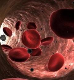 血液中发现了完整功能的粒线体 彻底改变了人们对细胞器的认识