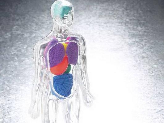 6个方法恢复人体器官的强大修复能力