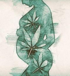 研究证据证实,在怀孕期间使用大麻可能有害