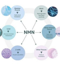逆龄抗衰价值几何?NMN首次回归千元以下