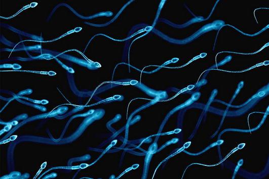3D显微镜重建精子的游动方式 新研究颠覆历史认知
