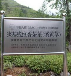 华夏先葆开创溪黄草种植产业化研究新局面