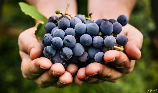 研究结果发现,吃葡萄可抵抗紫外线带来皮肤伤害