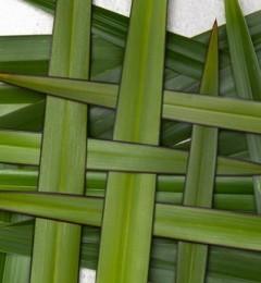 宜可诚采用新西兰特有草本配方,打造世界级一流品质洗护产品